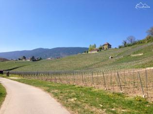 winnice regionu Neuchatel