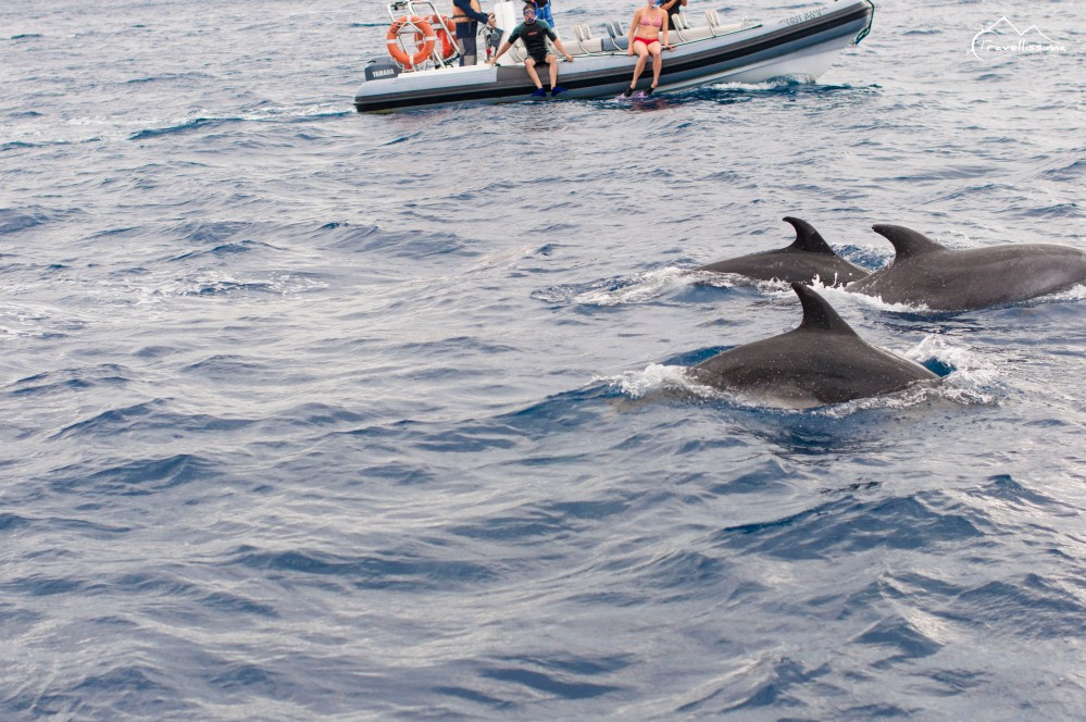 Azores_Anna_Kedzierska_Travellissima-0747