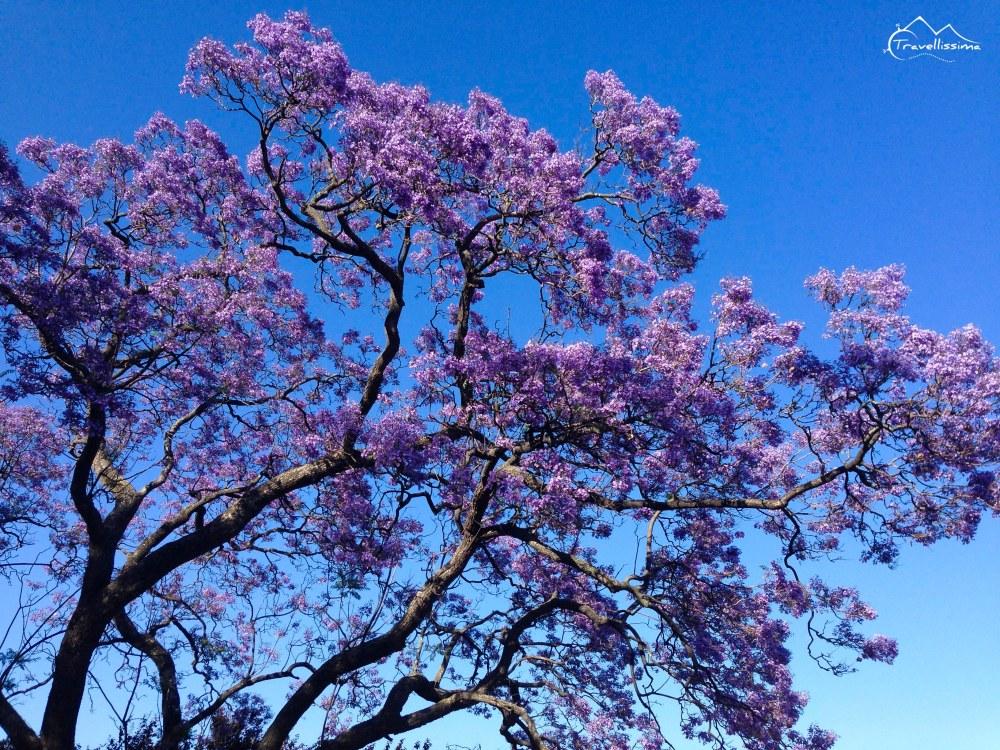 Lisbon_Anna_Kedzierska_Travellissima-1